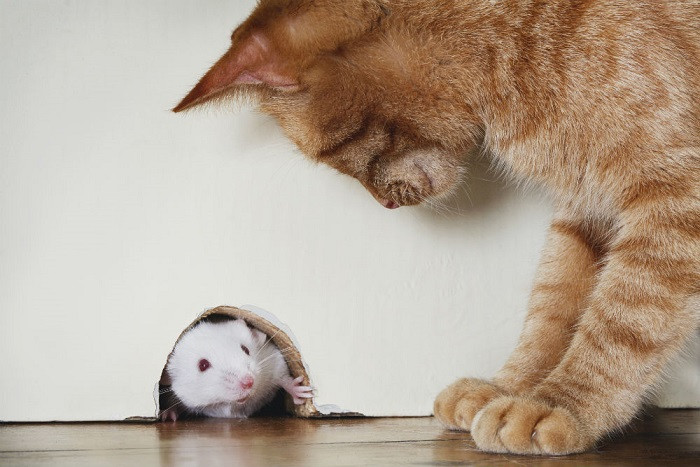 how-to-Get-Rid-Of-Mice-in-home